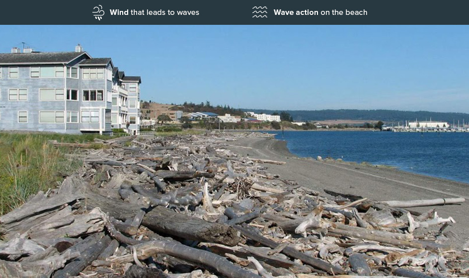 Beach showing low erosion risk